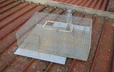 cage de capture