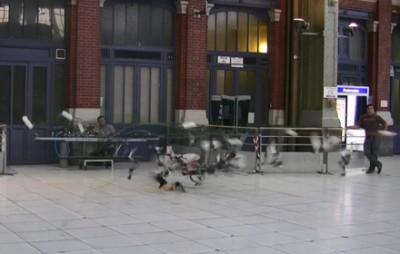 canon : capture de pigeons