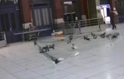 pigeons dans les gares