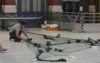 capture de pigeons dans les gares